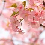 【日本のナイチンゲール!?】新島八重とその人生