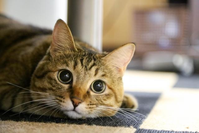「動物」に関する写真|写真素材なら「写真AC」無料(フリー)ダウンロードOK
