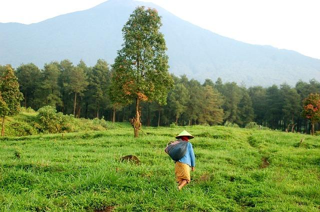 無料の写真: ファーム, Java, インドネシア, マウント, アジア, 旅行 - Pixabayの無料画像 - 1737182