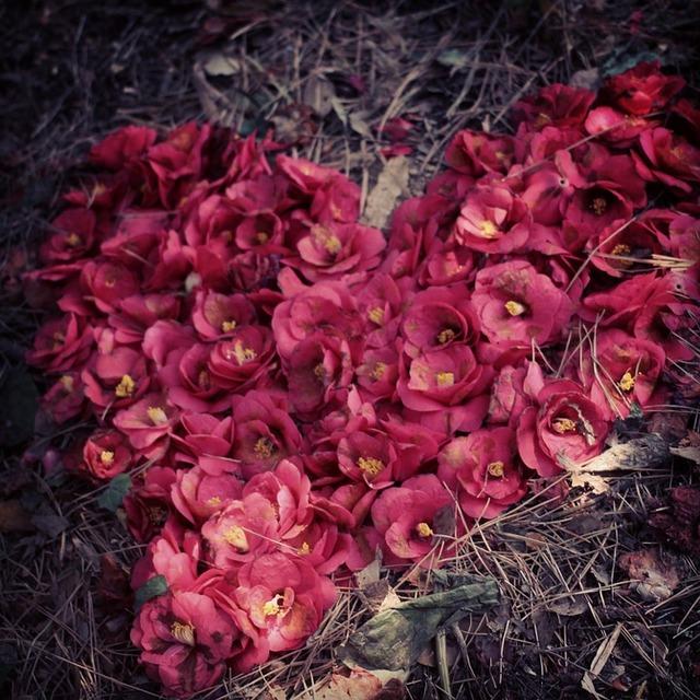 無料の写真: 麗水, 椿の花, 心臓, ハート - Pixabayの無料画像 - 665519