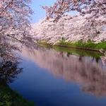 やっとこの季節!おすすめ桜祭りスポット【京都編】
