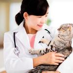 動物が好き!獣医看護師になる方法や求められるスキルとは