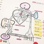"""看護専門学生3年生!""""看護学生インスタグラマーha__mmさんのノート"""""""