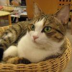 【心の】夜まで遊べるニャ!井の頭線でゆく都内猫カフェ巡り【オアシス】