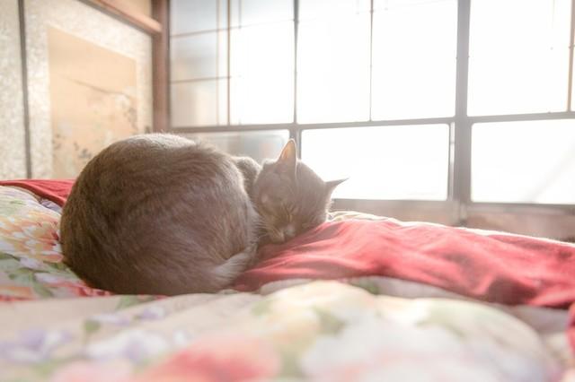 ひなたぼっこしながら布団の上でスヤスヤ眠る猫|フリー写真素材・無料ダウンロード-ぱくたそ