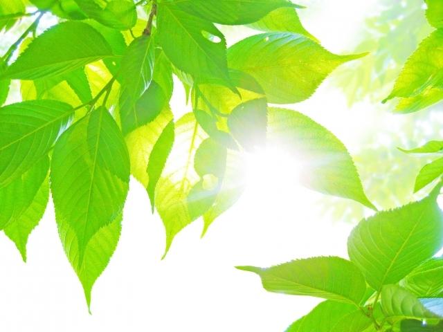 木もれ日|写真素材なら「写真AC」無料(フリー)ダウンロードOK