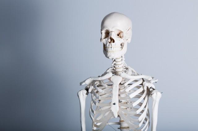 骨格標本|フリー写真素材・無料ダウンロード-ぱくたそ