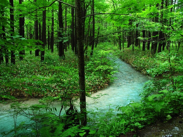 Free photo: Kamikochi, Forest Bathing, River - Free Image on Pixabay - 1757108