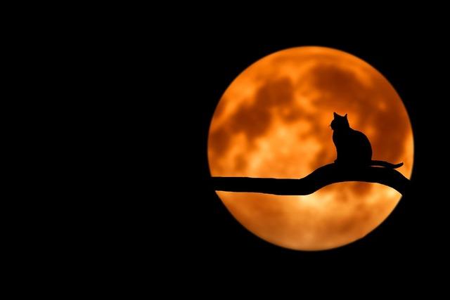 無料の写真: 驚くべき, 美しい, 息をのむ, 雲, 色, カップル, 夜 - Pixabayの無料画像 - 736877