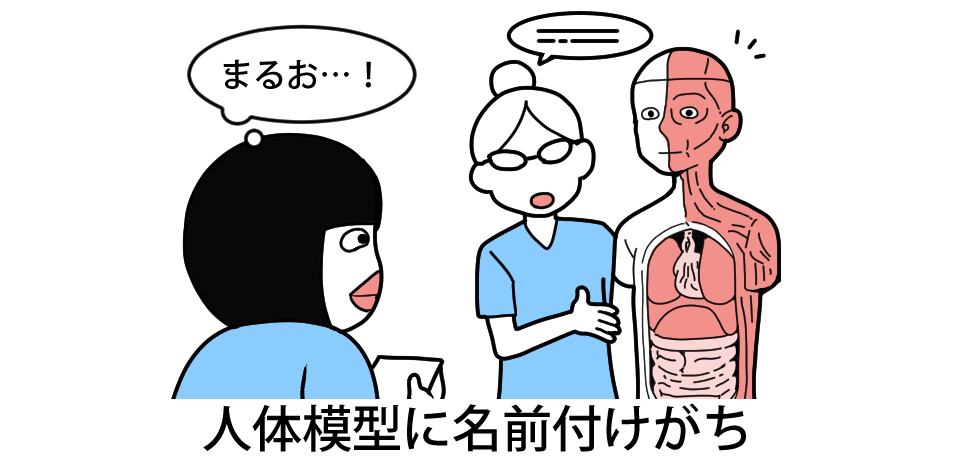 「まるお・・・!」人体模型に名前つけがち